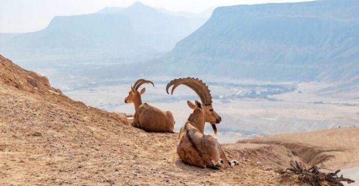 altai nomads travel